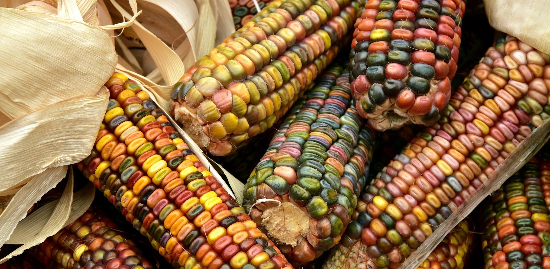 Malditos transgénicos: los mitos sobre estos alimentos y por qué no hay  evidencias de que sean peligrosos o dañinos - Maldita.es