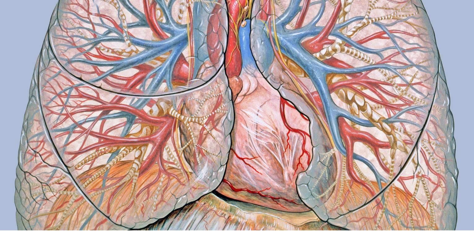 ¿Los síntomas de infarto pueden ser distintos en las mujeres? Sí, aunque el dolor en el pecho sigue siendo el más frecuente - Maldita.es