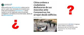 ¿Qué sabemos sobre la supuesta orden del Gobierno chino a sus ciudadanos de 'deshacerse de sus mascotas ante el coronavirus'?
