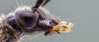 Malditos bichos: ni gusanos mortales en los pimientos, ni peligrosos insectos que producen hongos (tampoco los ácaros te servirán de excusa para no hacer la cama)