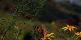 ¿Qué sabemos sobre el aumento de insectos en las ciudades tras el confinamiento? La lluvia y la falta de gestión de las zonas verdes han sido las causas